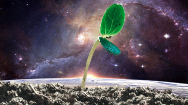 plant sprout with a planet and space background